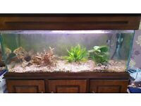 Fish tank and unit £250