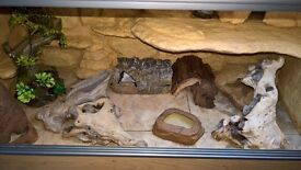 Lizard/Reptile Vivarium (Leopard Gecko) custom made climbing wall and all accessories