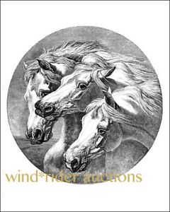 PHAROAH'S HORSES - Arabian horse black and white ART print 8
