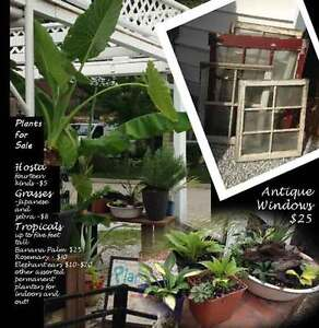 Saturday and Sunday Plant Sale September 9th/10th