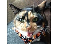 Female Adult Tortie Cat ~ free to a good home