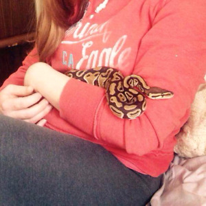 Ball python w/tank and accessories