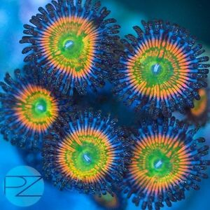 Lots of corals and Frags Sarnia Sarnia Area image 6