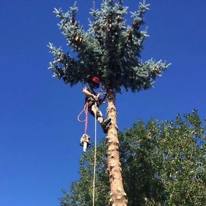 Tree Removal and Services - Free Estimates!