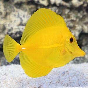 Divers poissons d'eau salée à vendre **DEAL**