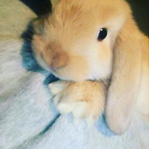 Floppy Ear Bunny