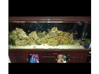 5ft full set up fish tank