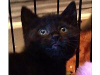 Gorgeous Kittens ****Ready Now****