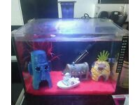 19 litre fish tank all set up with 2 free fish
