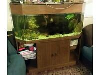 Cold water 4 foot fishtank