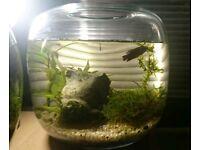 10L planted glass tank, nano tank, ready to add fish