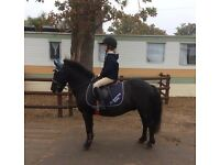 LOVELY FIRST/SECOND PONY 12.2, 11yrs old