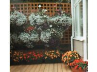 Red Bedding Begonia Tubers and Belgian Begonia Lemon and Orange Tubers