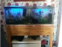 4ft tropical tank a stand.