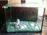 Complete setup Fish tank