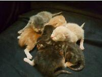 Kittens Born 16th November