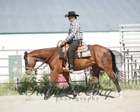 8 Year old AQHA gelding for sale.