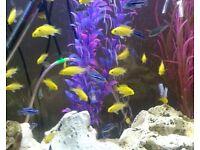 Yellow lab's