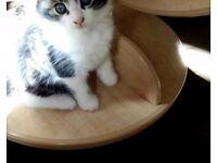 Kittens ready for forever homes