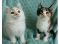 ADORABLE CLEAN KITTENS