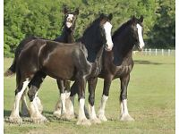 WANTED HORSES AND PONYS 5* HOMES OFFERED