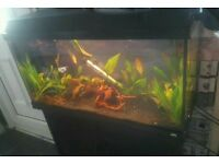 Fish tank with stand, light and filter