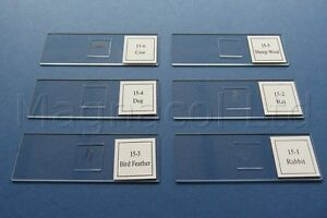 Microscope-slides-Prepared-slides-Animal-Hairs