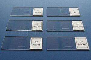 Microscope-slides-Prepared-slides-Earthworm-structure