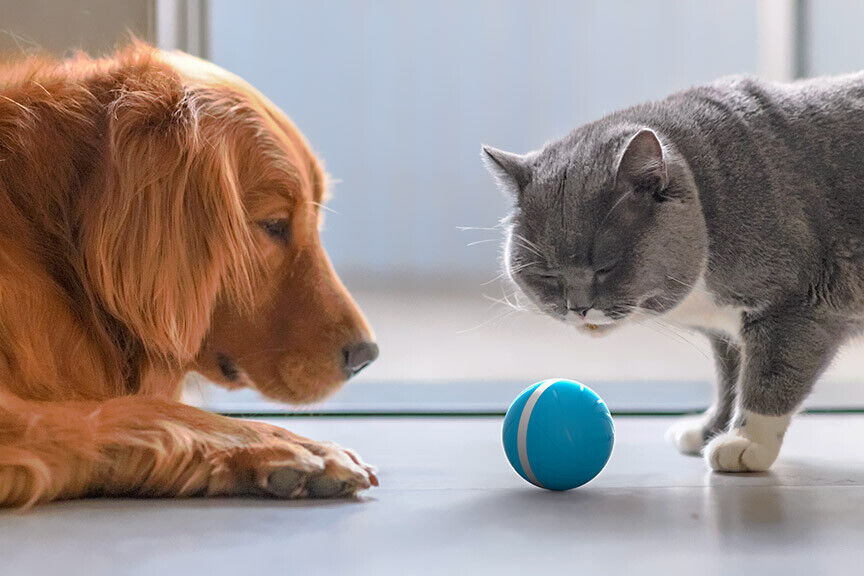 Wicked Ball - Your Pet's Joy when Home Alone | eBay