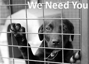 Fonzies Friends Animal Rescue NEEDS YOUR HELP! Windang Wollongong Area Preview