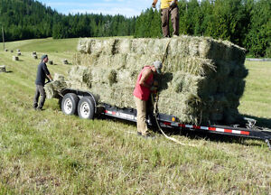 Horse-quality grass hay, delivery available