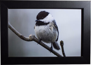 Awesome High Quality Prints! (Wildlife, city, nature, and more!) Cambridge Kitchener Area image 3