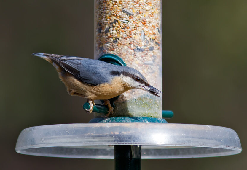 How to Attract Birds to a New Feeder