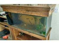 3ft complete set up + fish