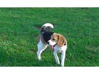 Ange's pet services - Dog walker/sitter/boarding