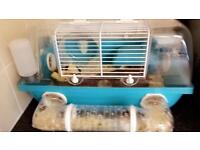 Dwarf hamster with cage and setup