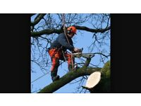 Tree surgeon in Birmingham