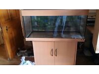 Large Fish Tank - Juwel 180 Aquarium and Cabinet, FULL Complete Setup