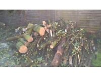 Freshly cut lime wood logs, suitable for wood working or as firewood