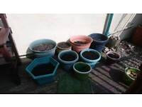FREE TO GOOD HOME 7 POTS WITH COMPOST IN