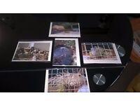 Handmade 5 animal cards – 5 cards £5