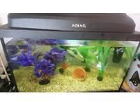 Aqueal fish tank