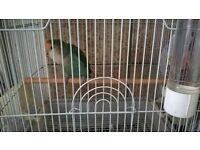 lovebird with cage and accessories