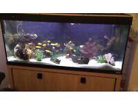 4ft fish tank tropical