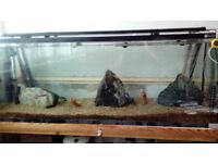 Aqua one 4ft Tank with fish Whole set up