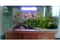 460l aquarium bow front