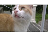 Cat in need of good home! Lovely, friendly ginger tomcat.