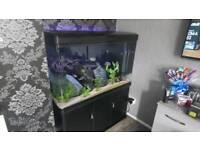 4ft aquarium and cabinet