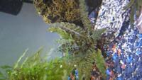 Fish, plants, aquariums and stands for sale