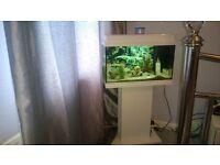 juwel 60l aquarium including stand filter, pump and heater